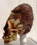 peru-elongated-skull